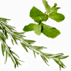 rosemary and spearmint essential oils